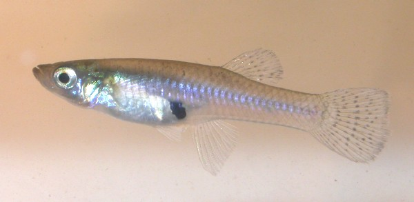January 2013 ~ Fishes World