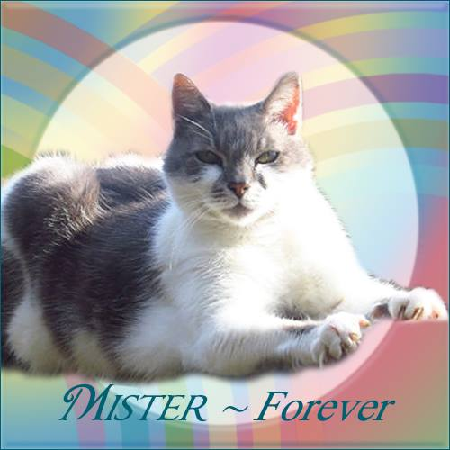 RIP MISTER