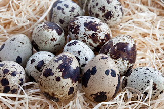 Tác dụng và cách làm đẹp da bằng trứng chim cút