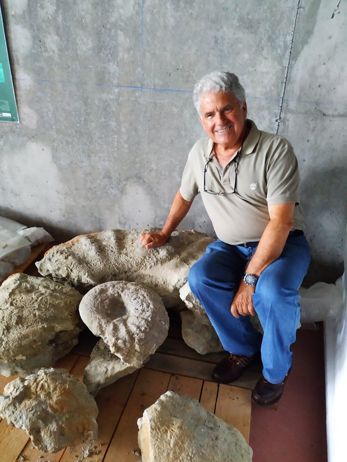 Ammonites gigante