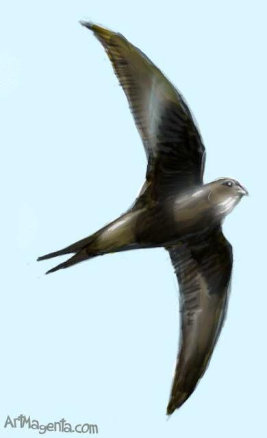 Tornseglare är en fågelmålning av ArtMagenta
