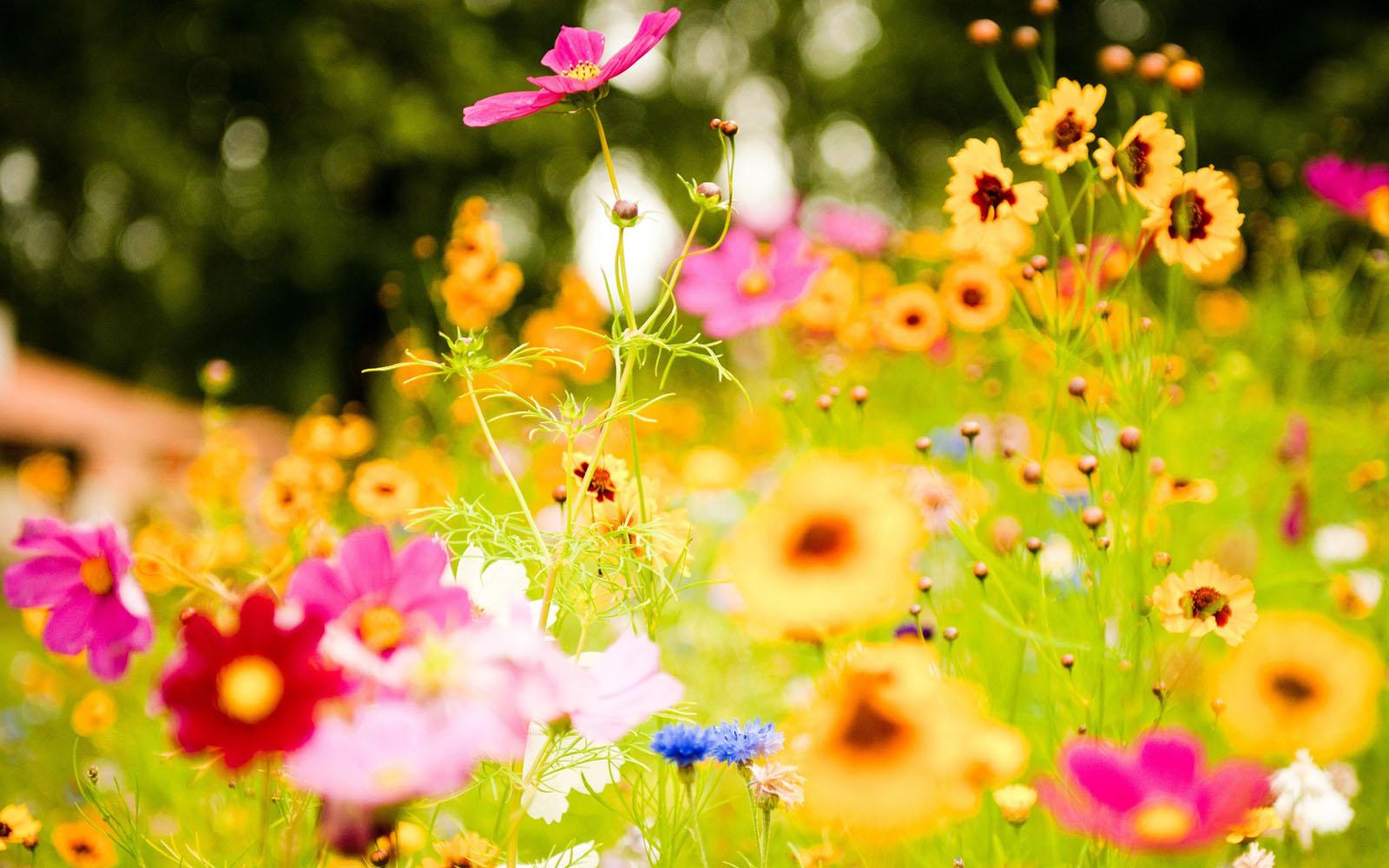 Windows 8 Flower 6974782