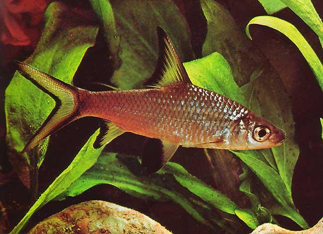 Acuarios estanques y mas diccionario de peces 1 for Nombre de estanque pequeno para tener peces