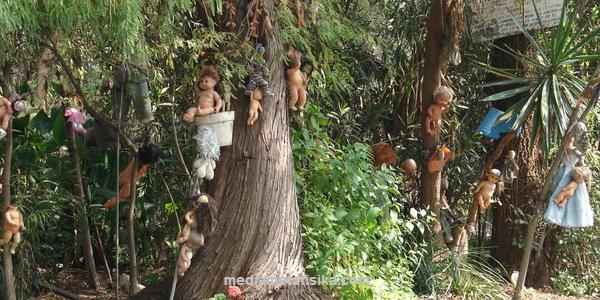Hutan Angker Diburu Penggemar Misteri Media Mediametafisika Gambar