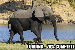 funny elephant half we loading