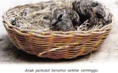 Burung bakalan kurang nafsu makan