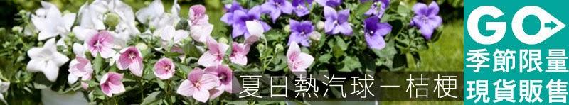 夏日熱汽球:日系風雅桔梗 - iGarden 2015 春播單品專題
