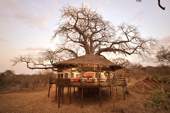 Safari Fusion blog | African treehouses | Safari tree lodgings at Tarangire Treetops, Tanzania