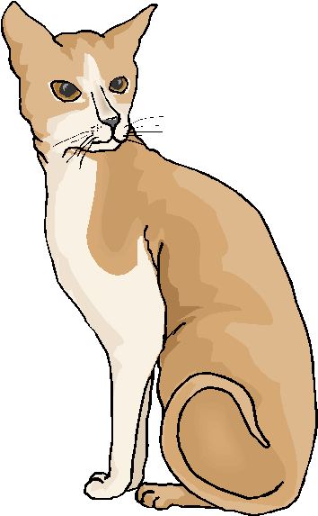 Brown and White Cute Cat Free Clipart