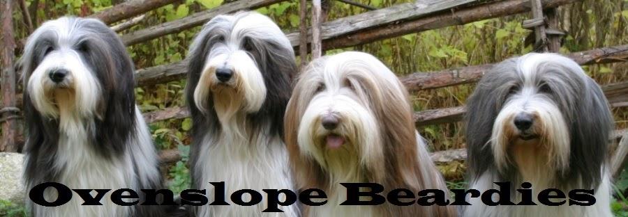 Ovenslope Beardies