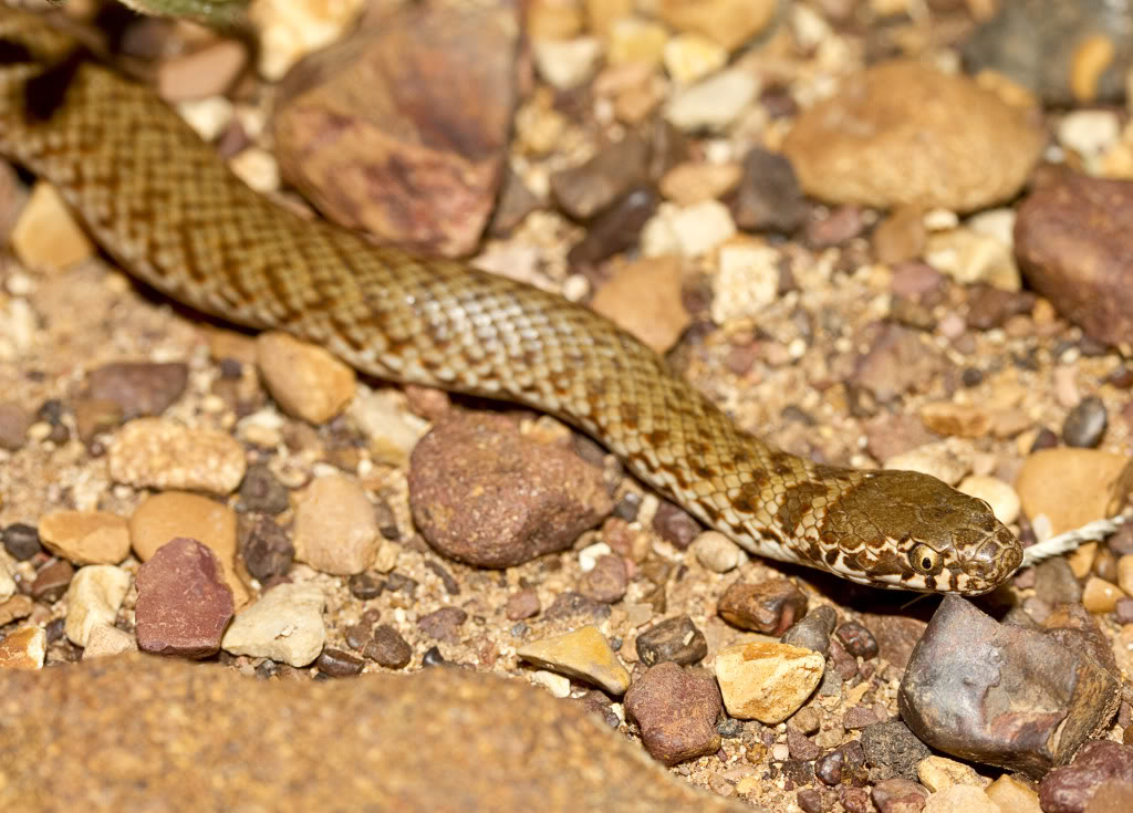 snakes essay Open document below is an essay on fear of snakes from anti essays, your source for research papers, essays, and term paper examples.