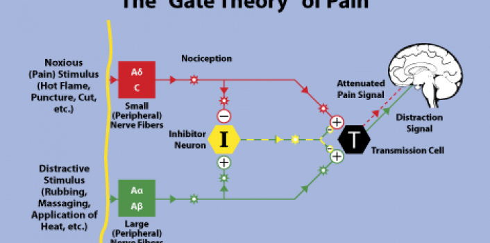 an comparison of the pattern and gate theories regarding the experiences of pain In the theory of interpersonal relations in nursing, peplau emphasized patients' experiences and the effect that nurse-patient relationships have on those experiences peplau asserted that the focus of scientific research in nursing should be patients, their needs, and their perceptions about the care they received from nurses ( gastmans, 1998 .