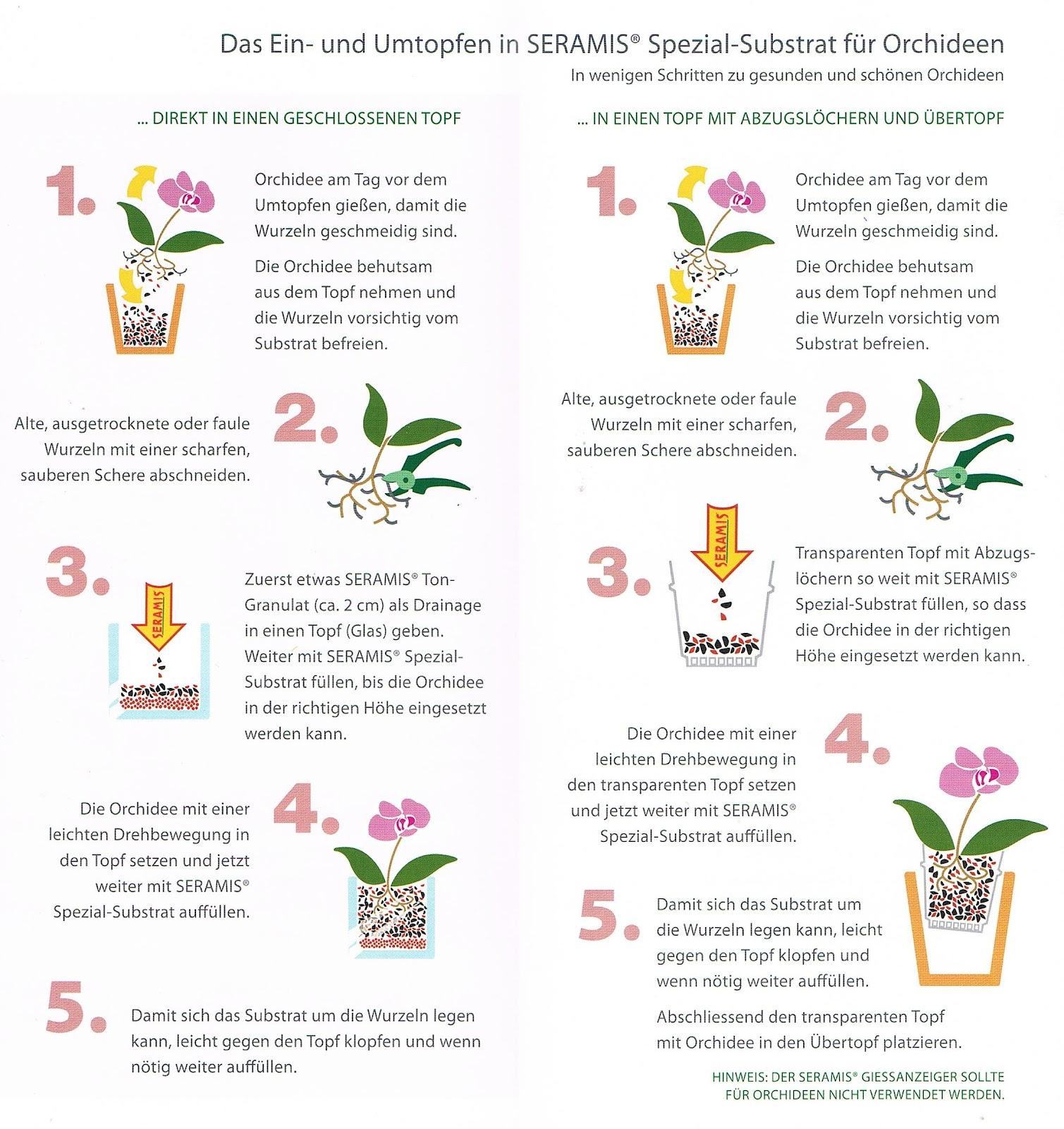 zimmerpflanzen umtopfen zimmerpflanzen umtopfen gartenblog zimmerpflanzen umtopfen sch ner. Black Bedroom Furniture Sets. Home Design Ideas