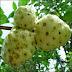 Fruta noni 153 vitaminas