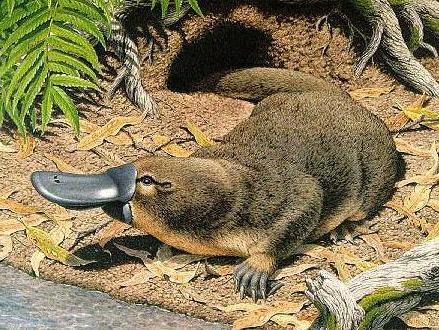 Los 10 animales mas venenosos del mundo Taringa! - imagenes de animales venenosos