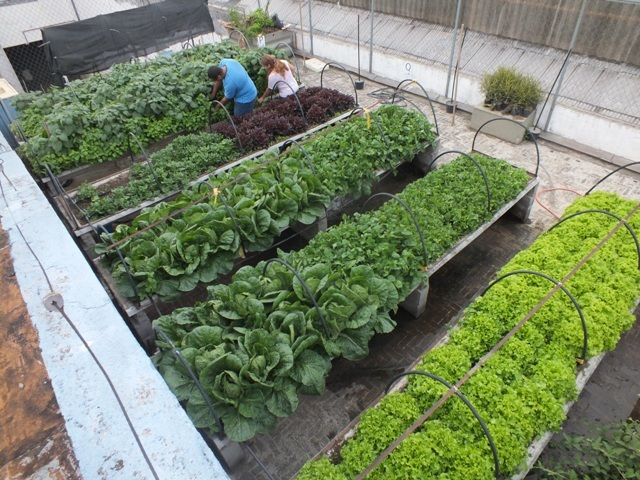 horta e jardim juntos:QUINTAIS IMORTAIS: Horta na laje da Faculdade Cantareira, em São