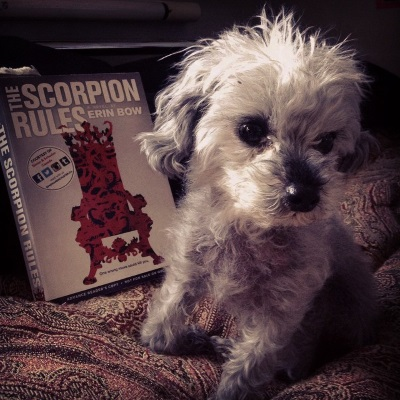 A fuzzy grey poodle, Murchie, kneels on a red tapestry comforter. Slightly behind him, propped up against a black pillow, is an advance copy of The Scorpion Rules. Its grey cover features the outline of a throne patterned in red scorpions.
