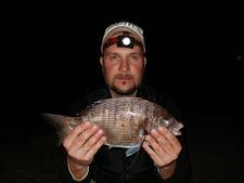 Sargo ao Rockfishing