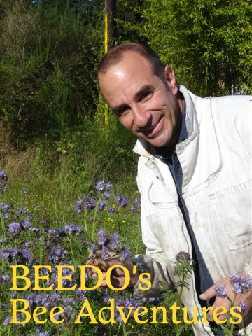 BEEDO's Bee Adventures