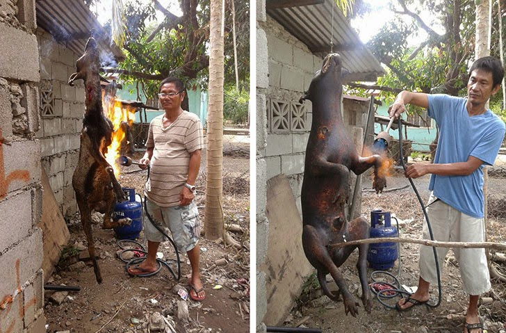 Goat, Dog Burnt With Flamethrower