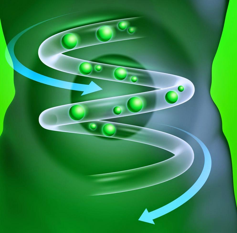 probiotici nell'intestino
