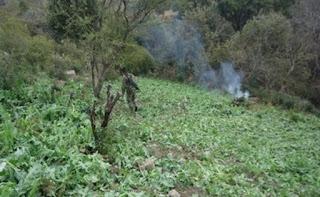 Se incineran 120 toneladas de narcóticos en Nayarit