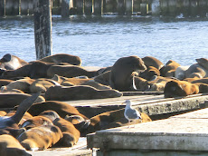 Pier 39 e i suoi leoni di mare