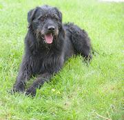 Lou the Black Dog, Chez Lui