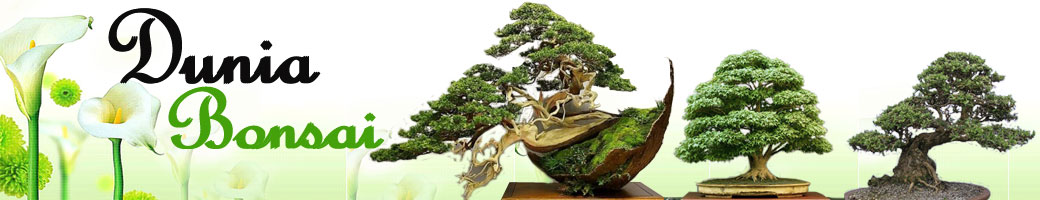 Dunia Bonsai & Tanam Bonsai