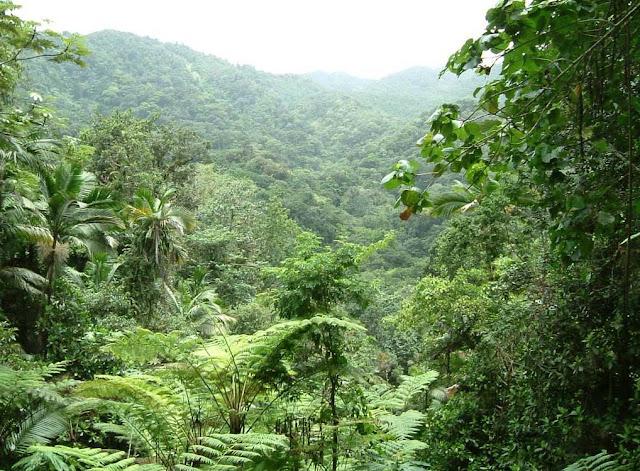 ze viagem foto floresta tropical