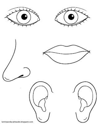 ojos, nariz, boca y oidos