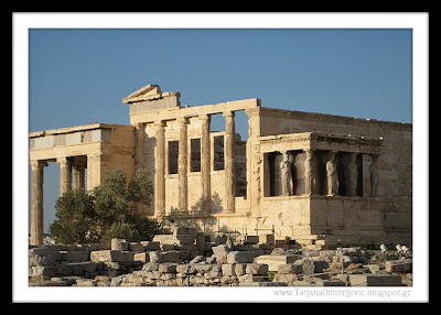 Athena's sacred olive tree growing in front of the Erechtheion,The Acropolis of Athens