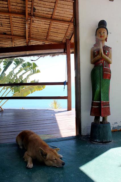 Dog Ko Phangan