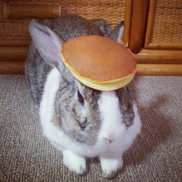 http://www.cutestpaw.com/images/est-picture-of-a-bunny-with-a-pancake-on-its-head/