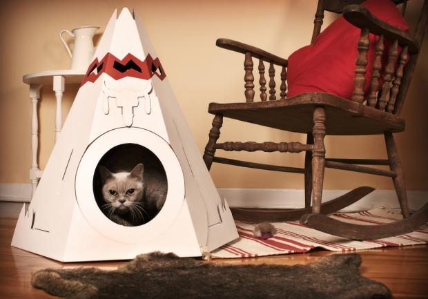 los amigos  Como escolher uma casa  para seu Gato
