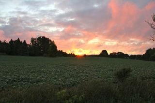 photo of summer sunrise over soybeans