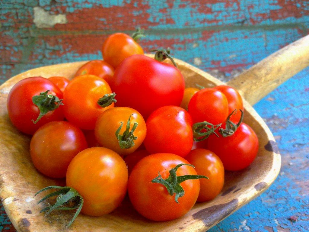nur gesunde sachen 100 vegan tomaten aus dem eigenen. Black Bedroom Furniture Sets. Home Design Ideas