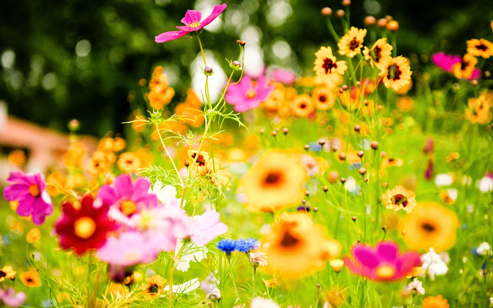 Beautiful flowers all over the world my web value beautiful and amazing flowers from all over the world nice pictures images photos and izmirmasajfo Image collections