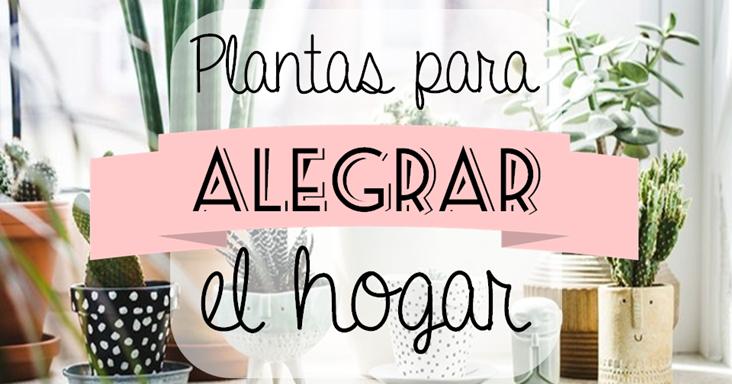 Shibar Ita Plantas Para Alegrar El Hogar