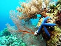 Taman Nasional Taka Bonerate Kepulauan Selayar Sulawesi Selatan