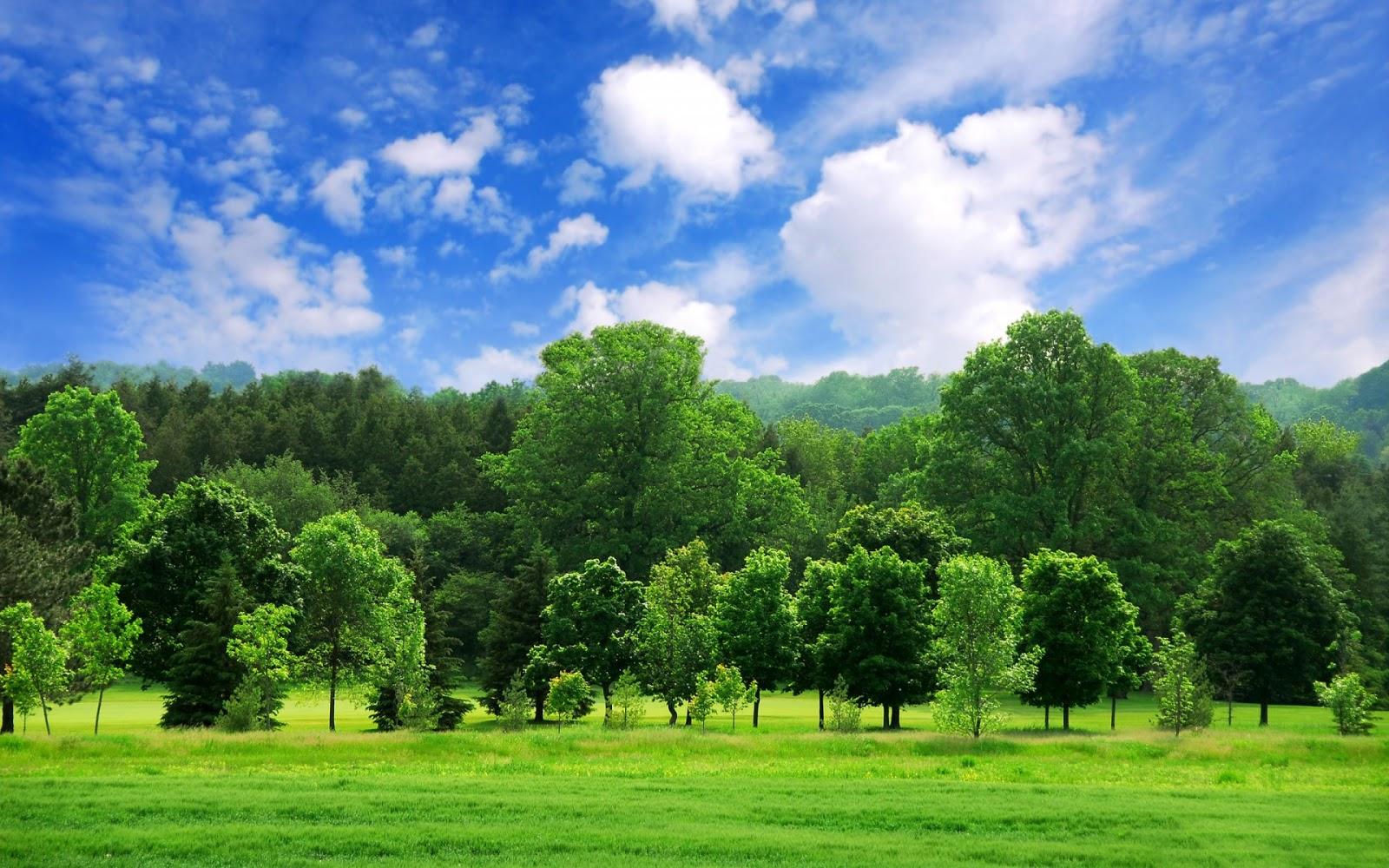 http://2.bp.blogspot.com/-pz4LMJcfU90/UIBipvmTEuI/AAAAAAAAI78/UNqumZyl0vE/s1600/beautiful_green_summer_landscape-1920x1200.jpg