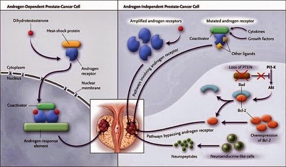 Castration Resistant Prostate Cancer