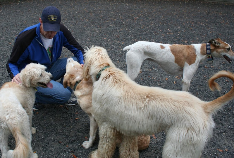 my husband in the arena kneeling down and surrounded by 4 dogs