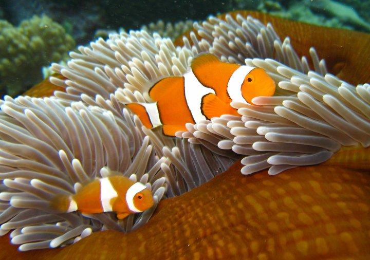 Pin immagini pesce nemo disegni da colorare imagixs for Pesce nemo da colorare