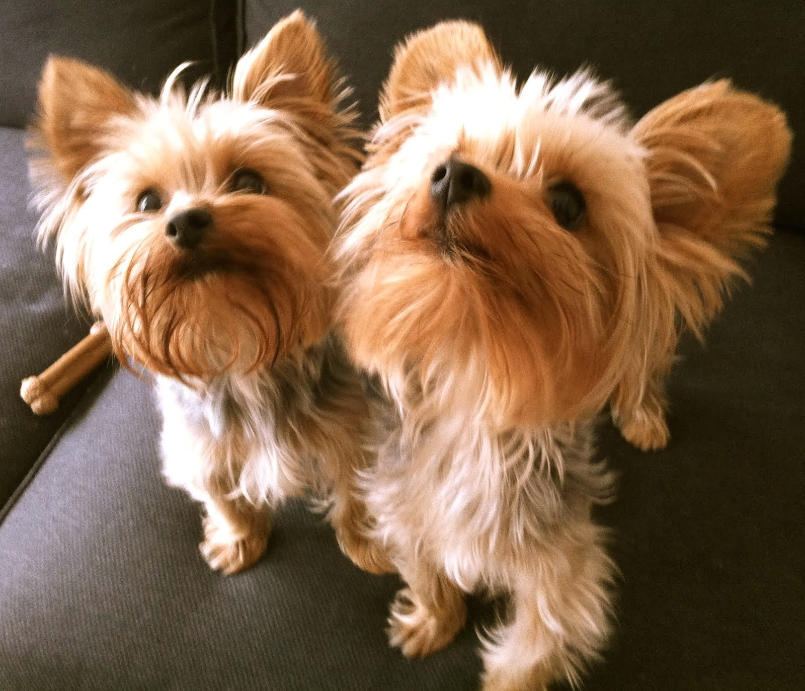 These are my Pups