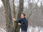 Insect and Disease Problems Affecting Your Trees