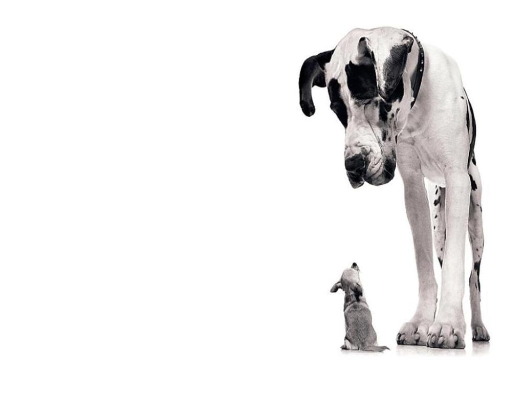 contrast essay large dogs and small dogs Dogs essay 576 words 3 pages cats vs dogs are you a cat person or a  the  cat descended from some larger wild cat but it is a little more complicated than  that  compare and contrast the similarities and the differences between dogs .
