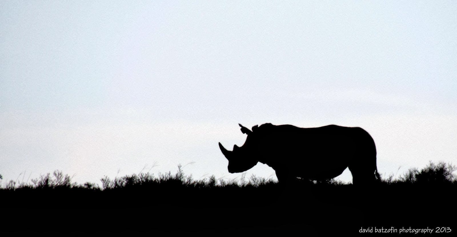Displaying 19> Images For - Rhino Silhouette...