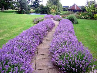 chão de jardim com plantas