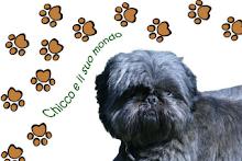 Meu amigo Chicco